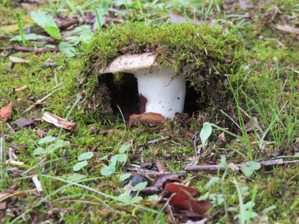 Mushroom IMG_3441